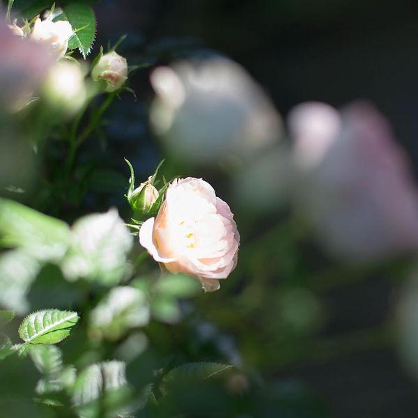 Nobara_coverphoto.jpg