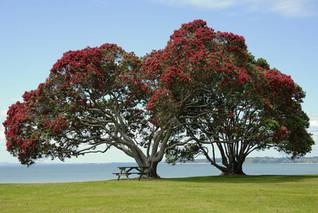 tree-141884_1920.jpg