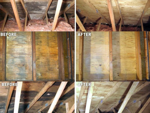 Attic Mould Remediation in the Greater Toronto Area
