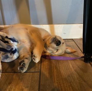 Madigan Taking a Nap