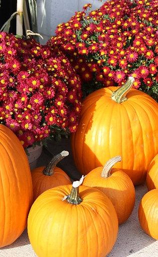 Local Grown Pumpkins