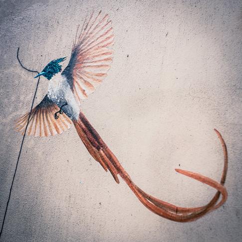 Daya, migratrice acrobate (détail)