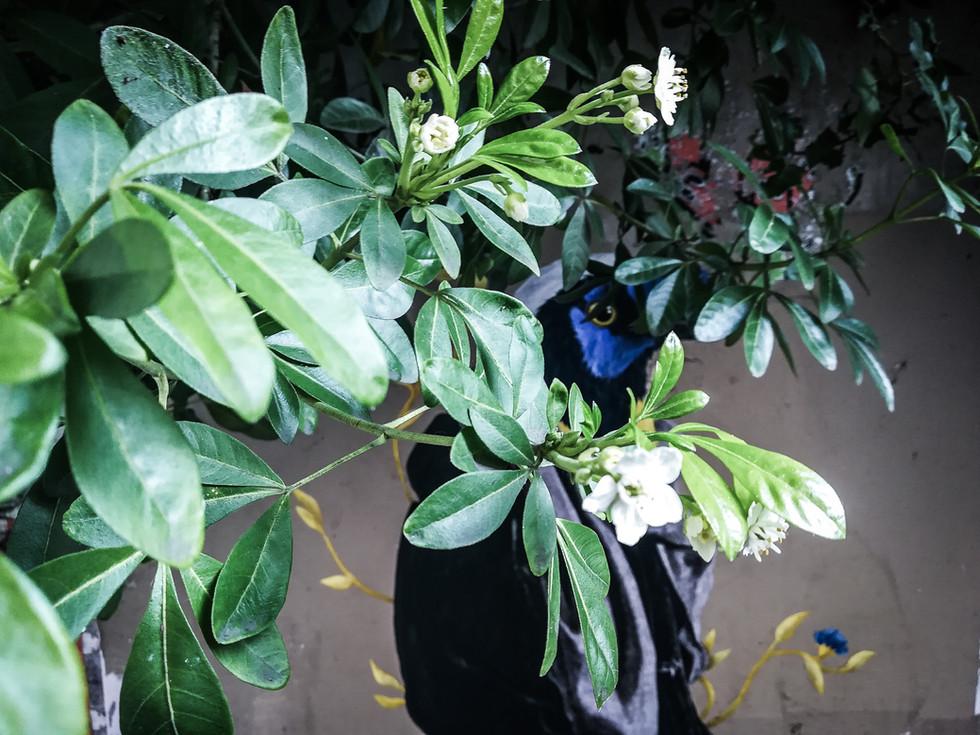 Diego, migrateur dans les fleurs (détail)