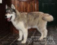 Wolf-5.jpg