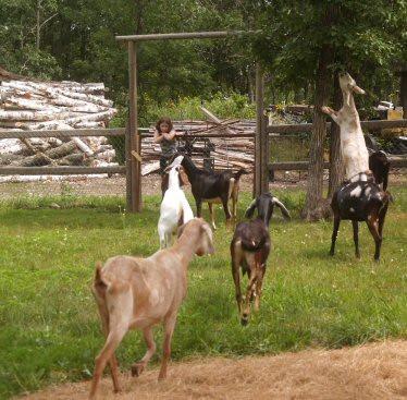 Environment_Goat8.jpg