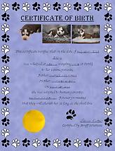 BirthCert.png