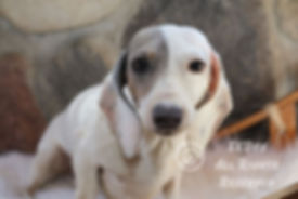 Snoopy-15.jpg