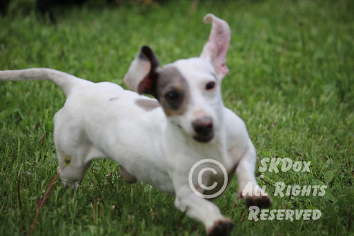 Snoopy-26.jpg