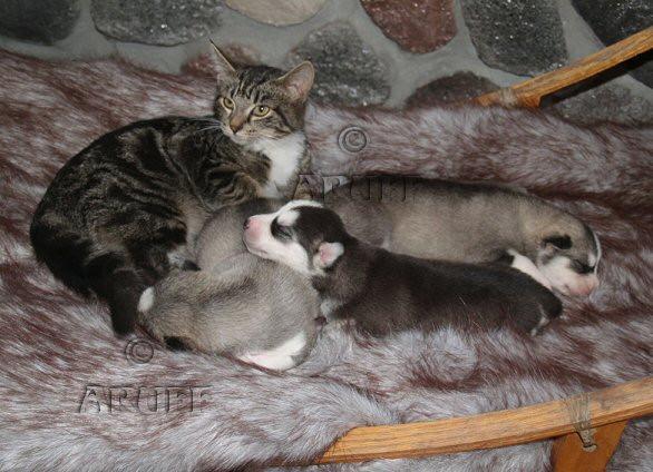 Environment_Kittypups.jpg