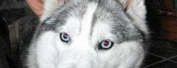 EyesNMasks_BlueEyes.jpg