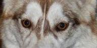 EyesNMasks_AmberEyes.jpg
