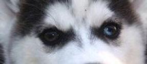 EyesNMasks_RavenRush9.jpg