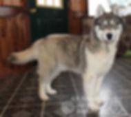 Wolf-7.jpg