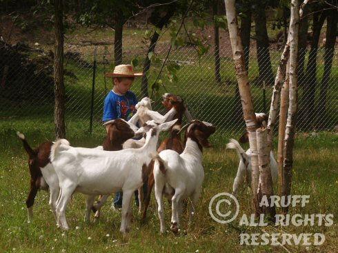 Environment_Goat10.jpg