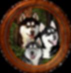 HuskyRound.png