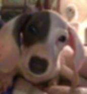 Snoopy3.jpg