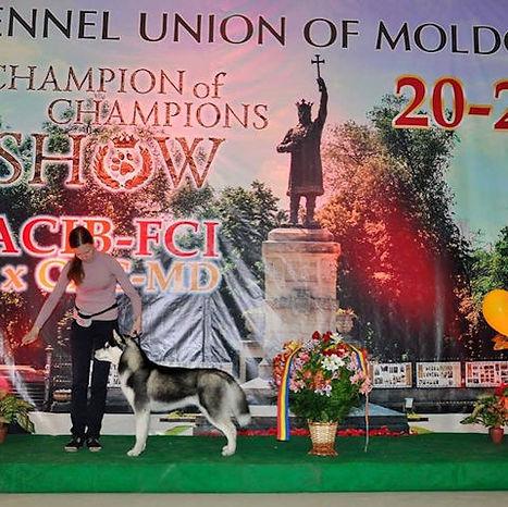 Amir-Show1.jpg