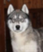Wolf-3.jpg