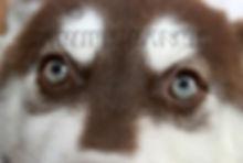 EyesNMasks_FyreFallGuy12.jpg