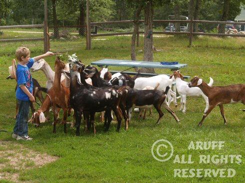Environment_Goat9.jpg