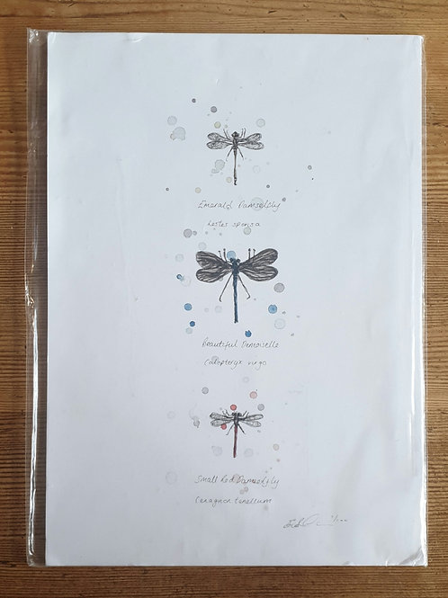 Dragonfly Print by Eleanor Tomlinson a4