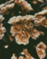 Sepia-Blumen