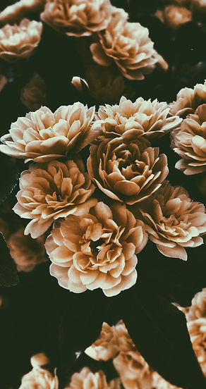 La sepia florece