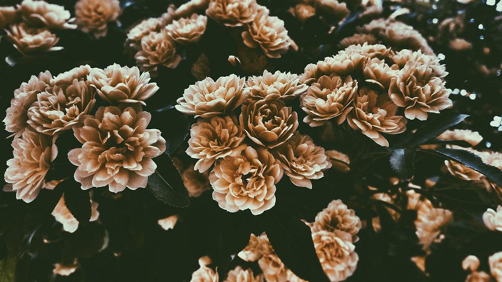 Sepia Цветы