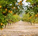 orange path.jpg