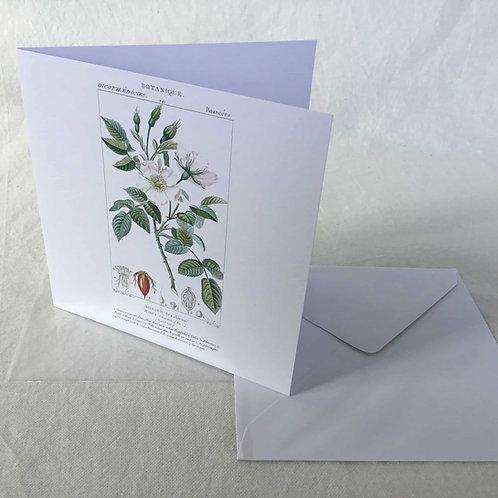 フランス ボタニカル (花A) グリーティングカード バースデーカード ブランクカード 9枚セット 封筒付き