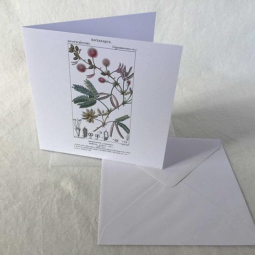 フランス ボタニカル (花B) グリーティングカード バースデーカード ブランクカード 10枚セット 封筒付き