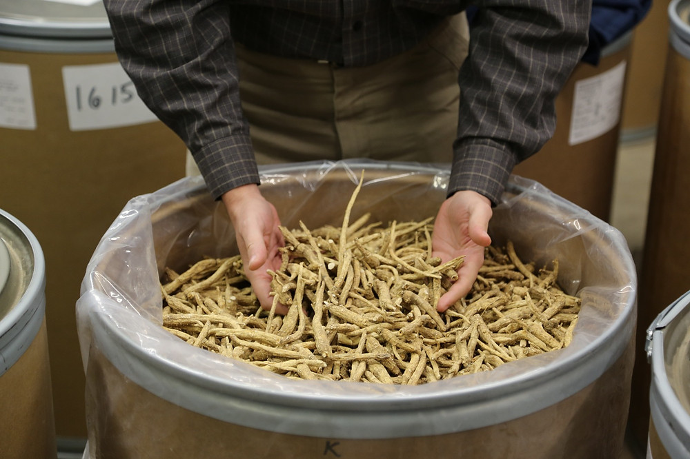 Our representatives personally select only the best of the best Wisconsin ginseng for our products
