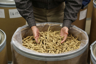 Two Oceans Representatives travel to Wisconsin to select exceptional ginseng from the 2016 harvest