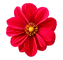 flower-favicon.png