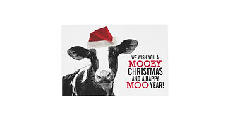 mooey_christmas_cow_in_santa_hat_placema