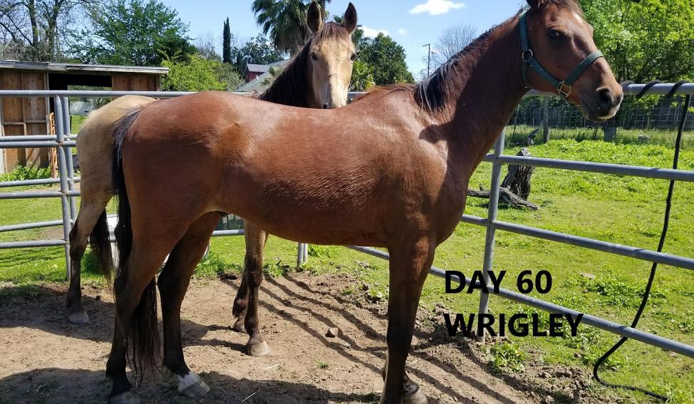 60 day Wrigley.jpg