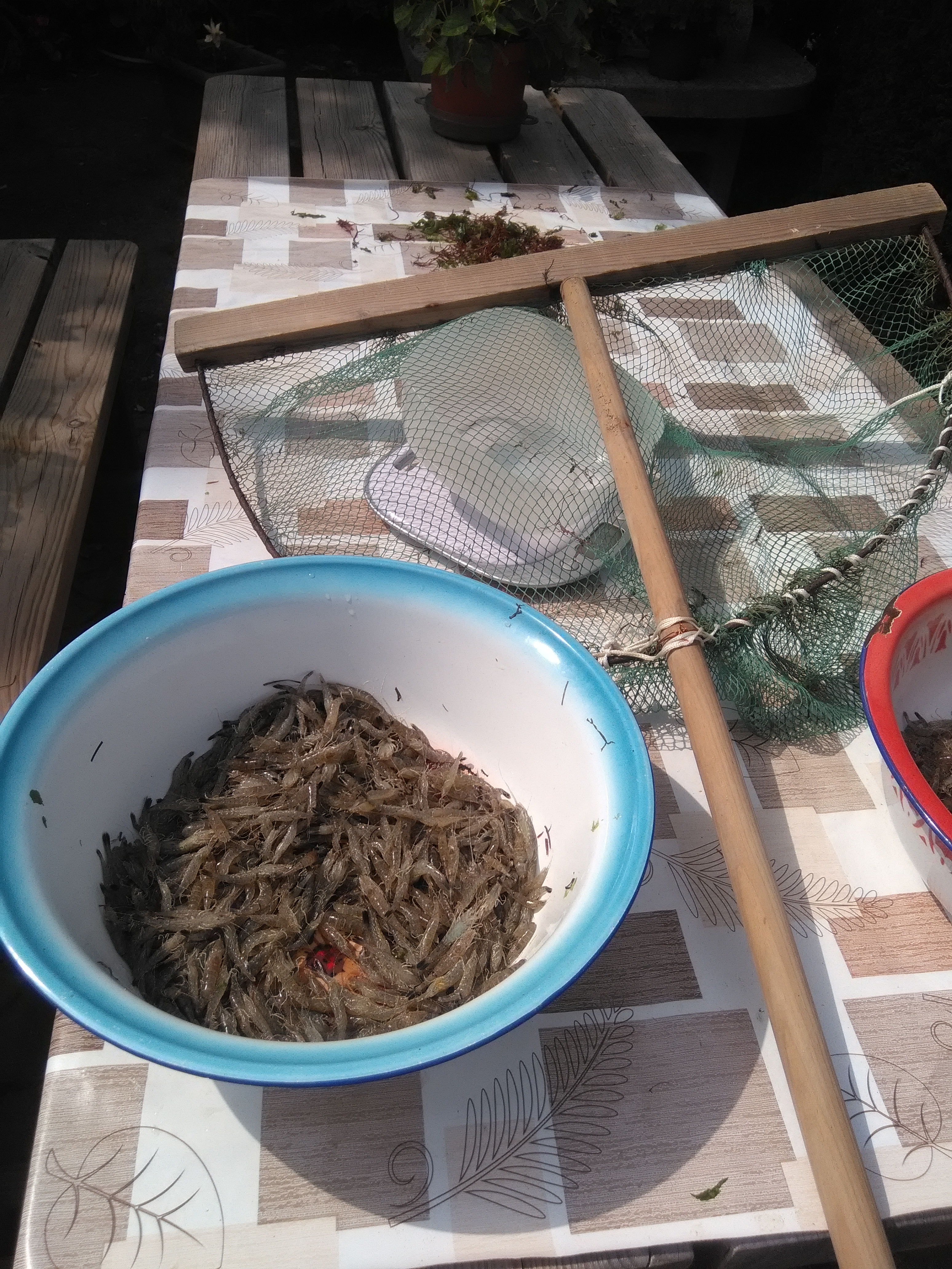 peche aux_crevettes