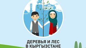 Деревья в Кыргызстане: факты и цифры