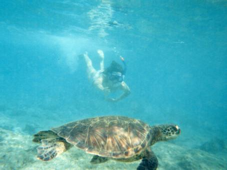 Snorkeling, Fears, & Living