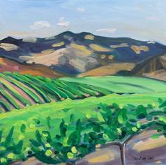 Happy Canyon Vineyard I, Santa Ynez