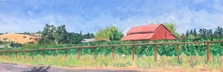 Solminer Vineyards, Los Olivos, CA. 2020