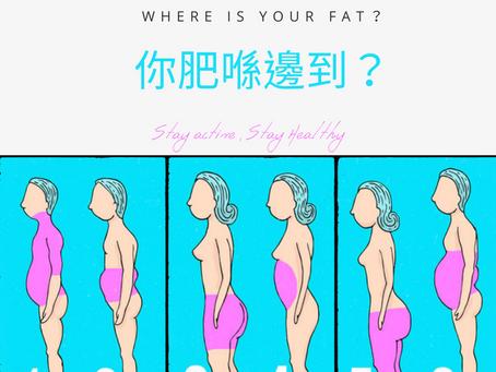 你肥喺邊到?