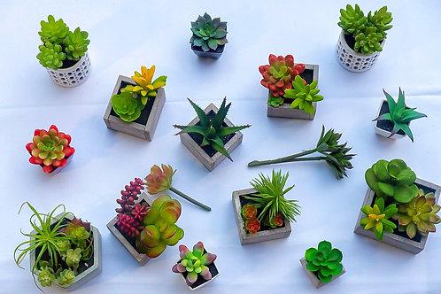 Succulents/Terraniums