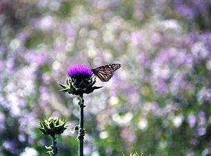 butterflyflower.jpg