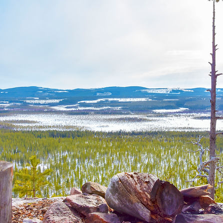 Surrounding nature at Laplandhusky in Swedish Lapland