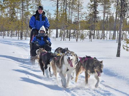 Self drive husky tour at Laplandhusky in Swedish Lapland