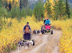 Alaskan husky autumn tour at Laplandhusky in Swedish Lapland