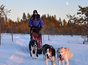 Mini expedition tour during a self drive husky full day at Laplandhusky in Swedish Lapland