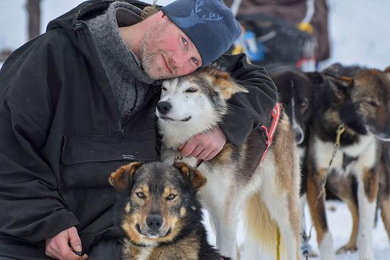 Alaskanhusky at Laplandhusky in Swedish Lapland