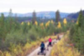 Husky self drive cart tour at Laplandhusky in Swedish Lapland